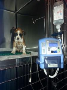cachorro-can2015033